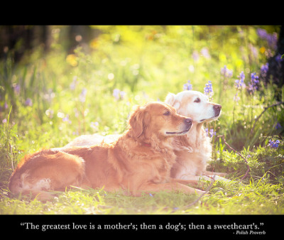 """the greatest love is a mothers's; then a dogs; then a sweetheart's"" by Sasha Bell on Flickr."