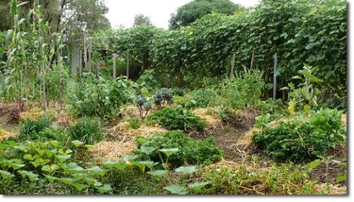 fuckyeahpermaculture: How to Establish a Small Space Intensive Food Garden Permaculture Research Institute