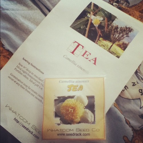 paranormalcore:   I just received my Camellia sinensis seeds and I'm super excited.