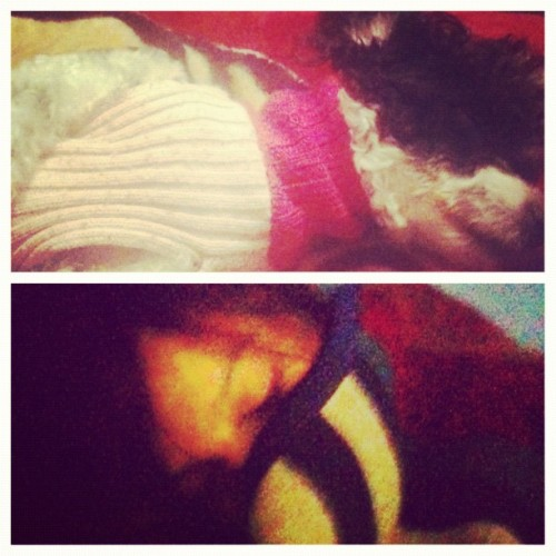 #picstitch @nirvanalove and luna sleeping :3 (Taken with instagram)