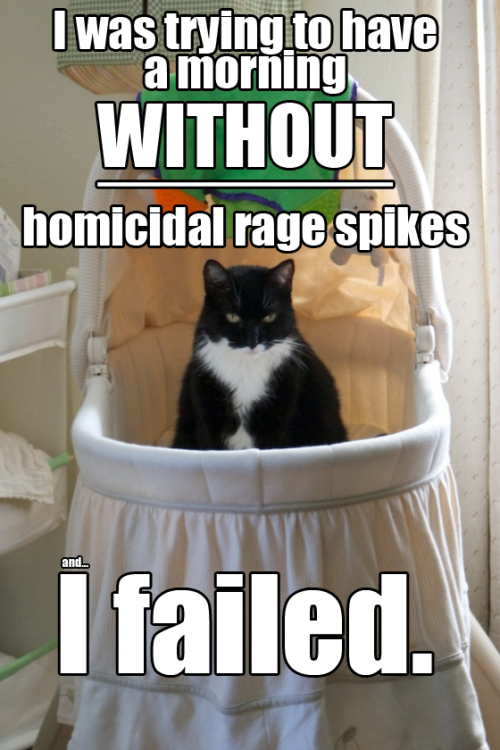 champagnecandy:  classwarkitteh:  All we want is a day without rage… Stolen from champagnecandy  I need about a week without rage. But at least classwarkitteh made me laugh.  I'd settle for a three-hour rage-free stretch.