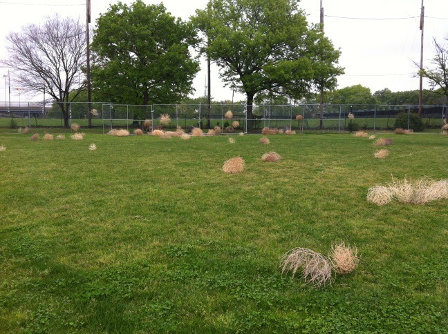 Latifa Echakhch's tumbleweed installation at Frieze New York 2012! Photo: Liz Gwinn