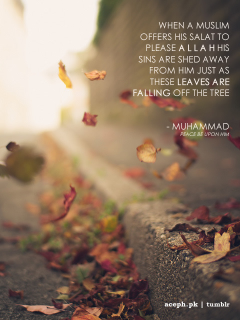 islamic-quotes:  Just like a leaves falling off