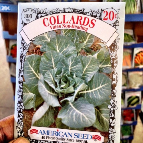 #OMG! This is the absolute best #Deal of the Day #American Seed for .20 cents. Lord Jesus l am like a kid in an candy store that found gold. Yipppeeeeee #spring #greenthumb #garden #foodspotting #snaptweet #iphoneography  (Taken with Instagram at Walmart)