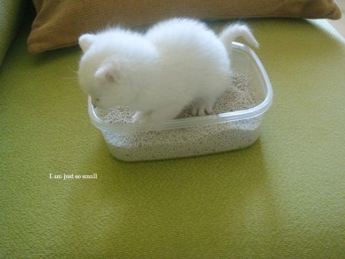 tea-and-kittens:  SO SMALL :3  Too Cute