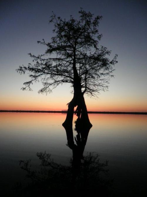 The Great Dismal Swamp National Wildlife Refuge is located in southeastern Virginia and northeastern North Carolina. The refuge consists of over 112,000 acres of forested wetlands. Lake Drummond, at 3,100 acres and the largest natural lake in Virginia, is located in the heart of the swamp.The Great Dismal Swamp National Wildlife Refuge trails are open everyday for hiking and biking from sunrise to sunset unless otherwise posted. The refuge headquarters is located at 3100 Desert Road in Suffolk, Virginia, and is open Monday through Friday, 8:00 am - 4:00 pm. The headquarters is closed on weekends and federal holidays, the hiking and biking trails remain open.Photo: Brian Hawkins, USFWS