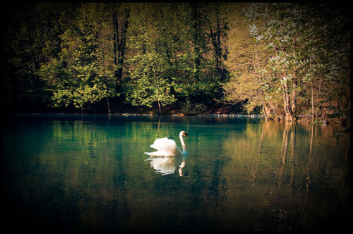 Swan's lake by NafLeNaf [studying] on Flickr.