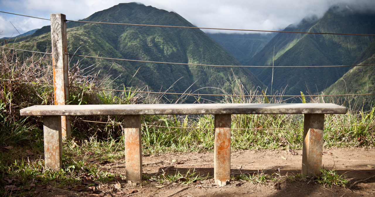 Bench. West Maui Forest