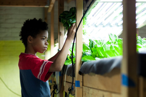 A Hydroponic Farm Grows In This Brooklyn Food Pantry  Urban farming is hard, but it gets easier when you can put it all inside, like they've done in the food desert of Bushwick. Now there is fresh lettuce for everyone. [click to read full article]