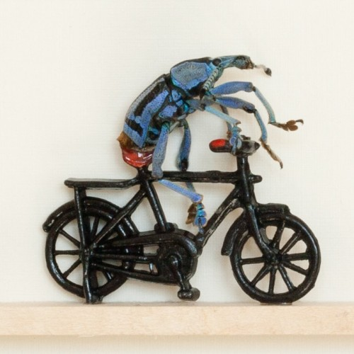 Real Beetle Riding a Bike - Kevin Clarke via Humbug Scumble