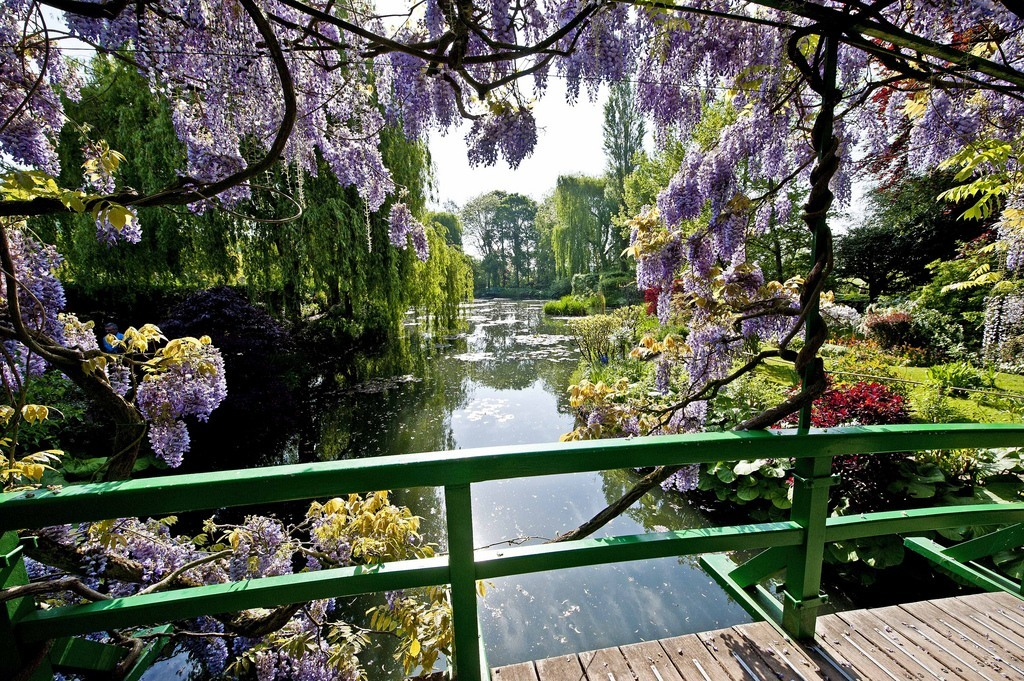 I'd say Giverny's pendulous wisteria clusters and tranquil Japanese footbridge combine to make for a proper muse, wouldn't you? For those who didn't catch a glimpse yesterday, our homage to this garden landmark is coming along nicely.