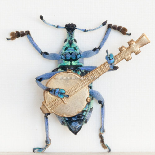 Beetle Playing Banjo Insect Art Diorama - Kevin Clarke via Humbug Scumble