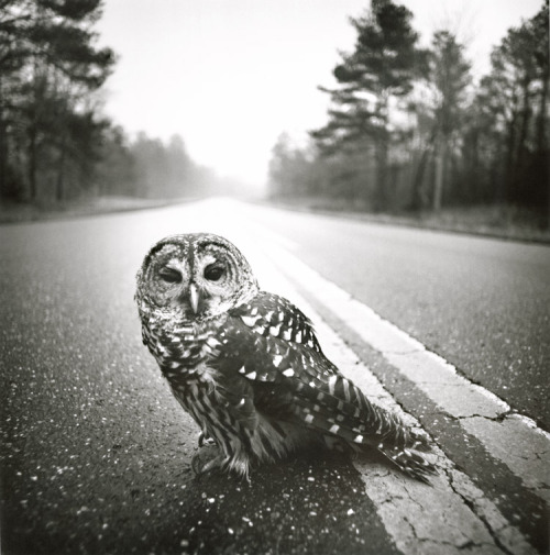 firsttimeuser:  Arthur Tress. Owl, Big Thicket, Texas
