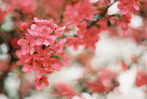 prettylittleflower:  a prescription for film, guest shutter sisters post (by SurprisePally)