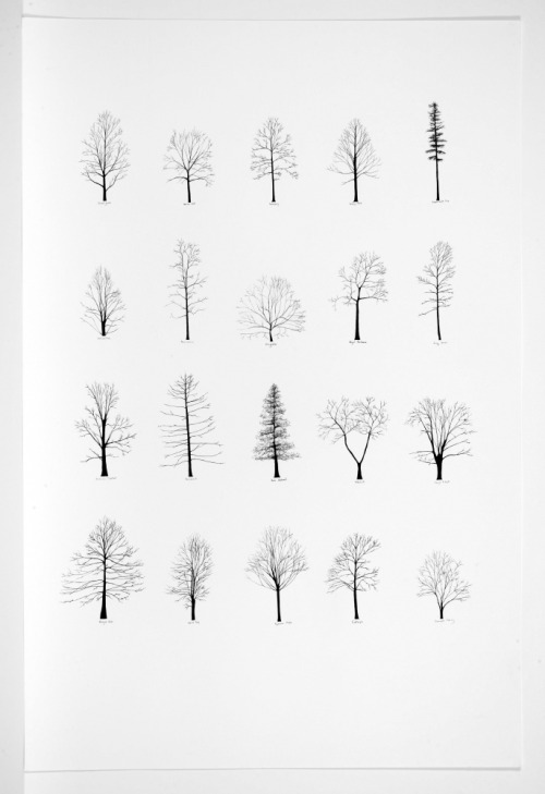 lesfemmesartistes:  Katie Holten, Trees of the U.S.A. III, 2007.