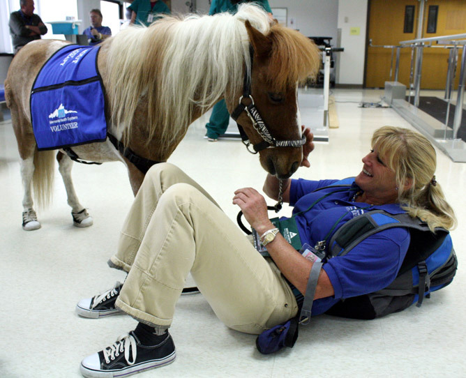 Miniature horse named Sprout aids hospital healing One of the most potent weapons in Memorial Health System in Colorado Springs' health-care arsenal is a decidedly low-tech healer who's outfitted with nothing more than sneakers, a sunny disposition and the royal blue volunteer vest that bears his name: Sprout.