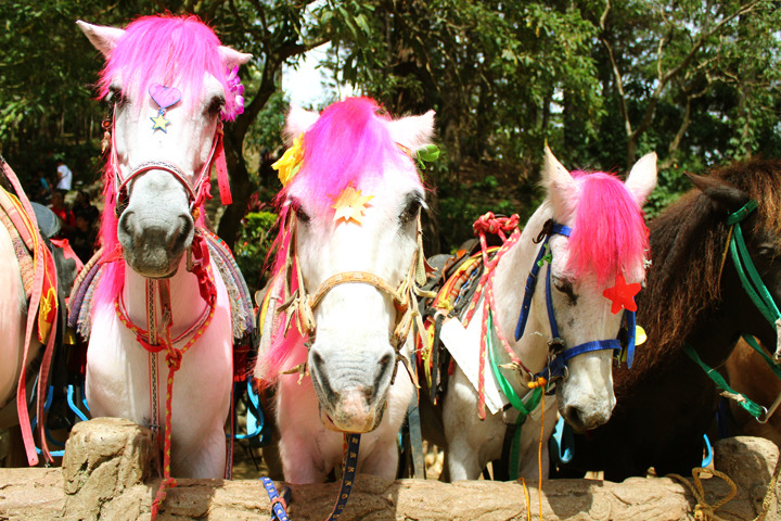 Horses and pink hair!  Read More » Baguio Work Trip