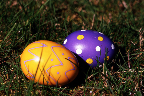 Day 103/365 - Eggs! on Flickr.Ah Easter- the time of the year where the lawn is covered in multi-colored land mines!