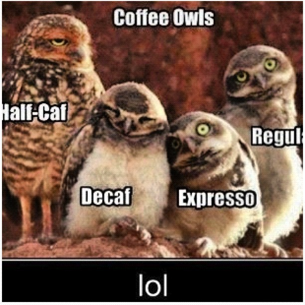 Stolen from @xparkurx! #coffee #owl #regula #black #half #expresso #drink #yummy #cofffreeee #giveme #addicted (Taken with instagram)