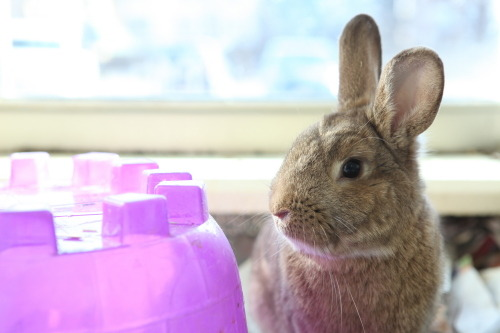 bunniesabound:  Derby Available for adoption through MSPCA Boston Animal Care and Adoption Center-Boston, MA