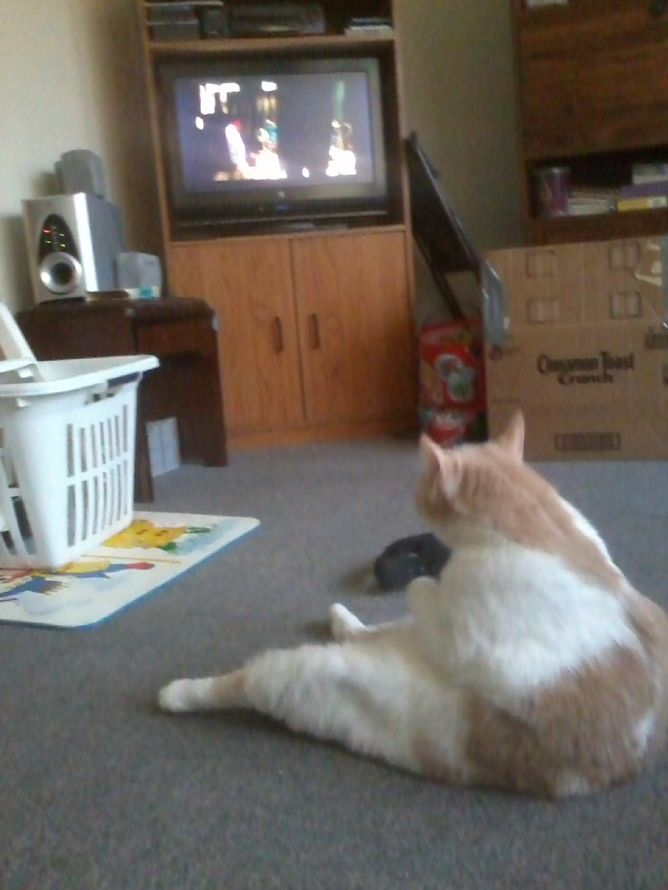 fuckyeahfelines:  Oliver watching Kill Bill  What a great photo. Kudos.