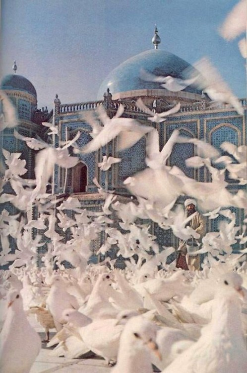 attolences:  A flock of birds fly in front of an Indian palace.