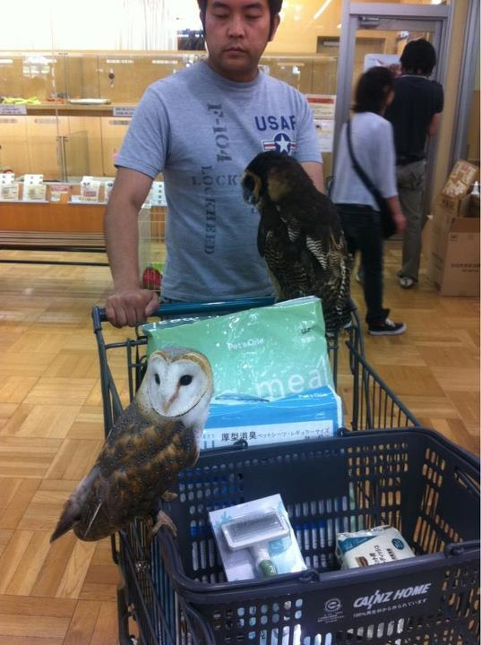 yayayayagagagagadadadadawowowowo:  Shopping with owls