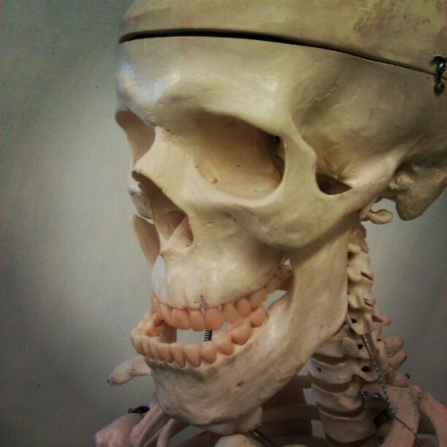 Haha a that #skull is such a #trol :D #trollface #lol #skeleton (Taken with instagram)