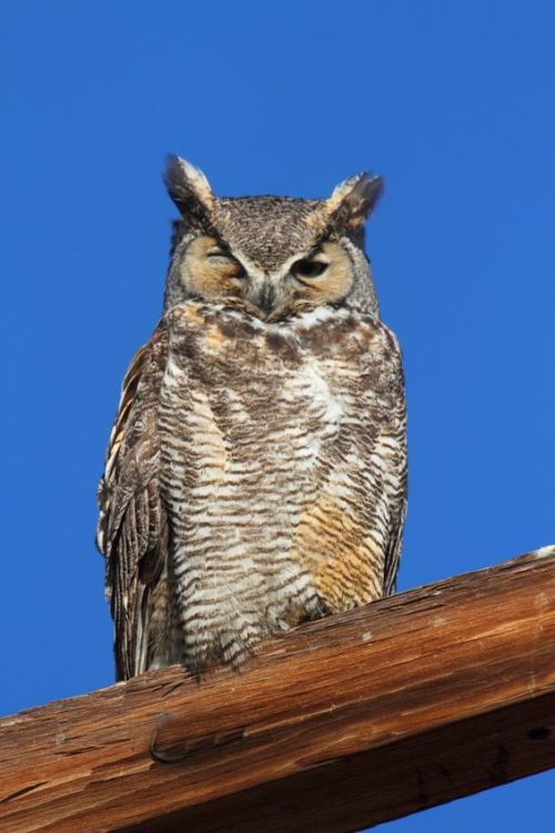 "mrdarrin:  hungoverowls:  ""Oh, the eye? There was a…yesterday that happened. I ran straight into a yesterday.""  Hungover owls dot tumblr dot com."