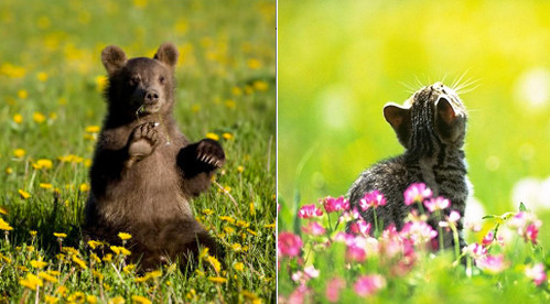 Who is cuter at chillin' in the field? Bear OR Kitty? Bear Image (beingmyself)  Cat Image (Your Guide)