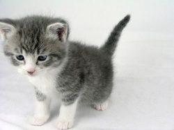 cat kitten cute cat adorable kitten