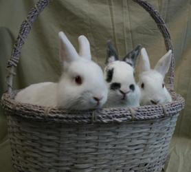 Cumulus, Cornelius, & Snowcap Available for adoption through the Animal Refuge League of Greater Portland- Westbrook, ME
