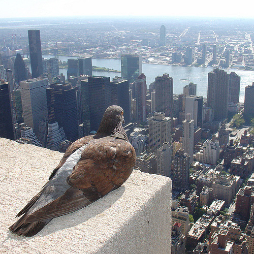 Happy Weekend! Catch you Monday, Internet!   Empire State Pigeon (by ZeroOne)
