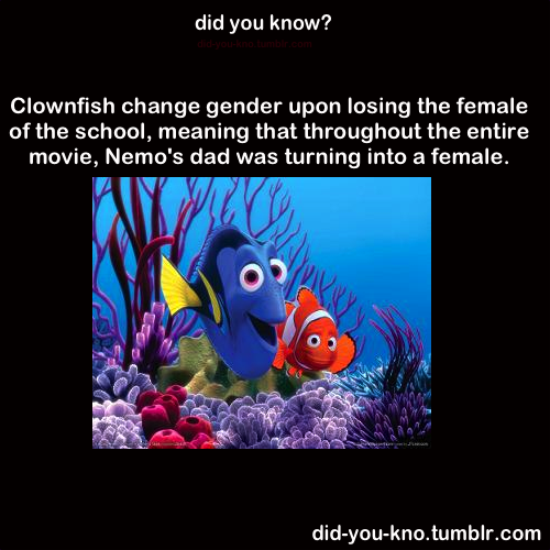 did-you-kno:  Clownfish schools usually have one alpha male and female. They are the only ones allowed to mate. Once the alpha female dies, the alpha male transforms into the alpha female through biological mechanisms. What occurs then is that the highest ranking inferior fish transforms into the next alpha male, in order to have the pack continue breeding. Source 1, 2