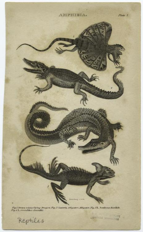 compendium-of-beasts:  [Reptiles.]  via NYPL