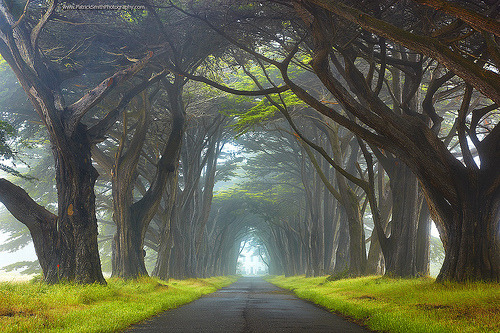 Myst - Point Reyes National Seashore, California (by PatrickSmithPhotography)