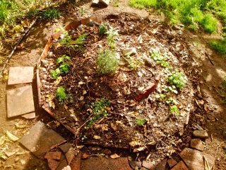 Spiral Herb Garden, courtesy of Gloria Riechers