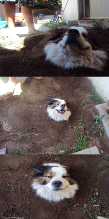 andyandhismom:  ircimages:  My dog tree finally started to grow  dog is pleased.  BAHAHA!!