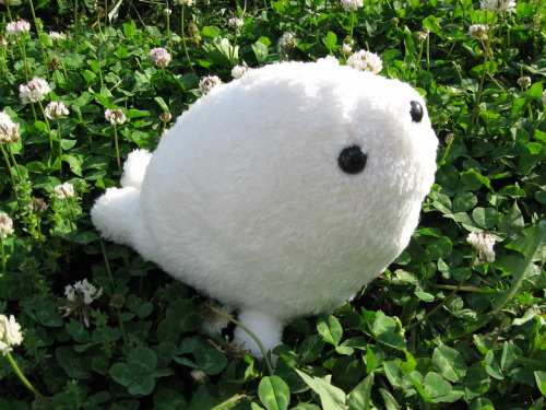 petiteplush:  My baby Seal prototype created a while back, I plan to start selling these soon after I work out a couple of bugs with the pattern! This was inspired by a sketch and some help from Steffy! ♥