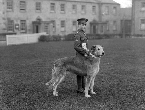 A very young member of the Irish Guards, pictured at Waterford Barracks with the regiment's mascot, an Irish Wolfhound, Wednesday, 21 February 1917. The dog was Leitrim Boy, out of Galtee Boy and Carlow Nora. Leitrim Boy was born on Tuesday, 12 November 1907, and so would have been 9years old when this photo was taken.