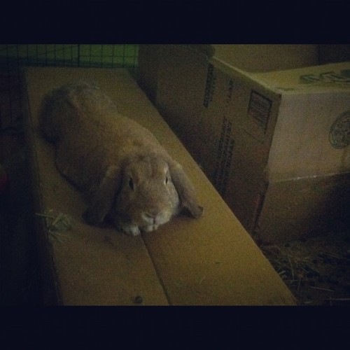 Lol tazzy being lazy on his box  (Taken with instagram)