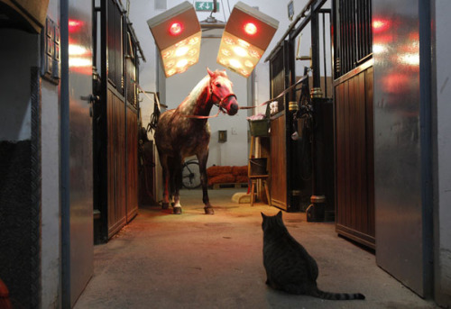 The horse vs. cat. (Photo by Lisi Niesner via Reuters Photographers Blog)