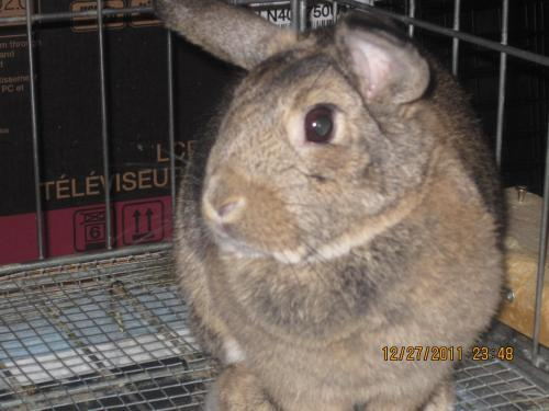 Funny Bunny Available for adoption through Etobicoke Veterinary Hospital- Toronto, ON