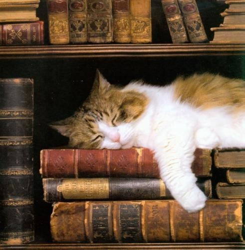 enchantedengland:  enchantedengland: Favourite things= Sleep + cats + OLD BOOKS!!