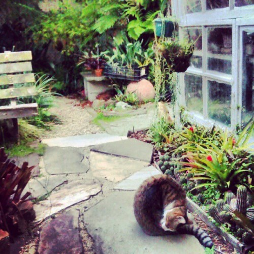 #backyard #makesmehappy #grandpaw  (Taken with instagram)