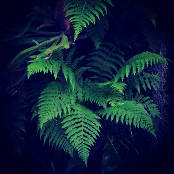 #backyard #fern  (Taken with instagram)