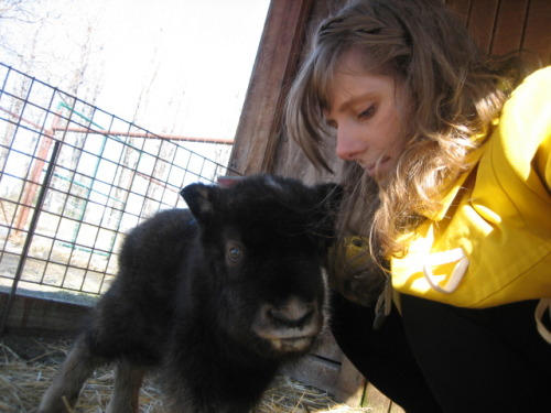see baby musk ox say hello to a long hiatus of see bear climb.