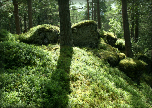 Norwegian woods, by my grandmother's house in the forest