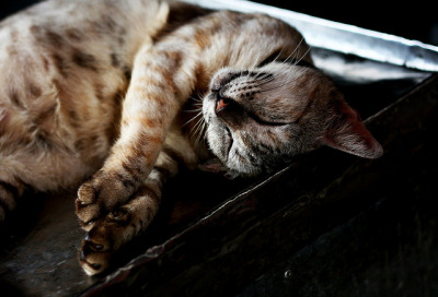 kittenjoy:  Happy cat by Rochelle Shing on Flickr.