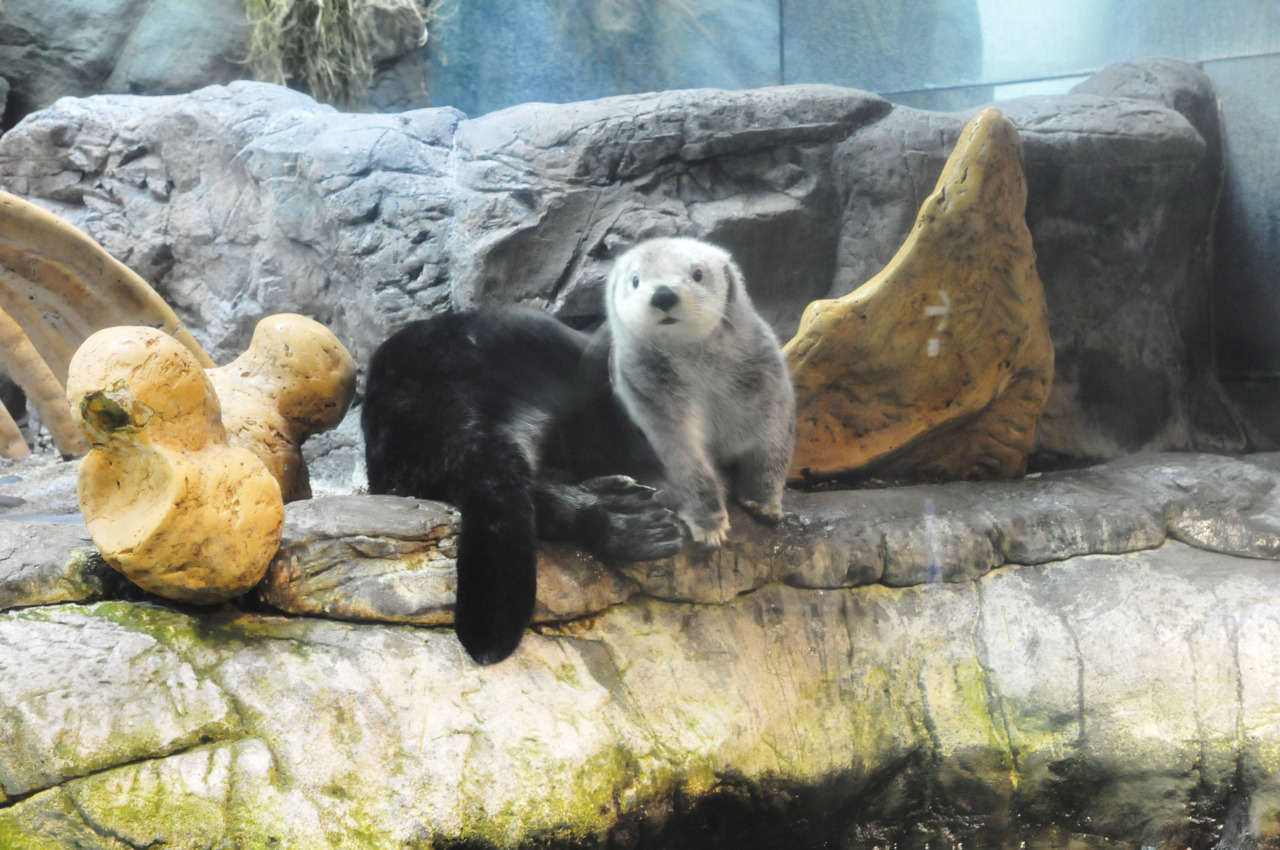 Here's another photo of that sea otter.